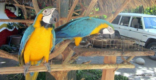 Macaws, AutoSafari Chapin Guatemala