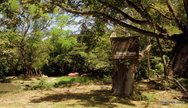 Hippo section AutoSafari Chapin - Guatemala Safari