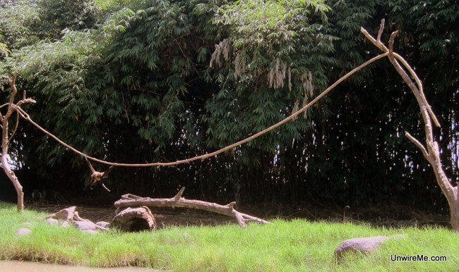Spider monkeys at AutoSafari Chapin - Guatemala Safari