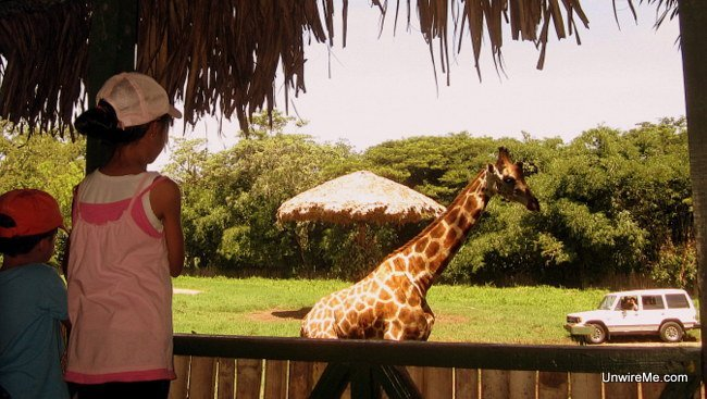 Giraffe observation tower at AutoSafari Chapin Guatemala