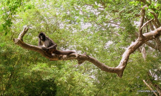 monkey at AutoSafari Chapin Guatemala