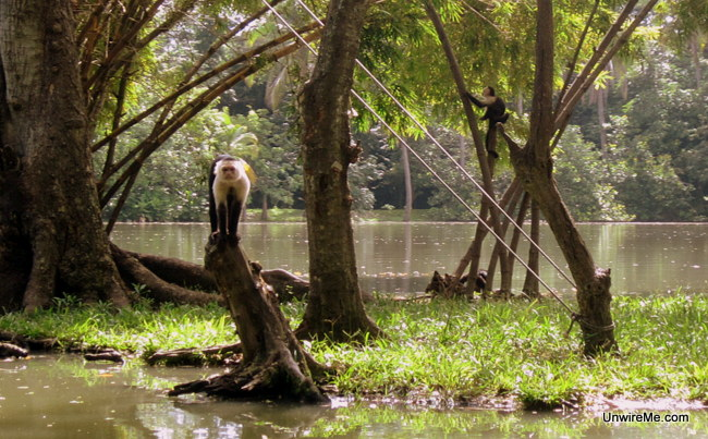 curious monkey at AutoSafari Chapin Guatemala
