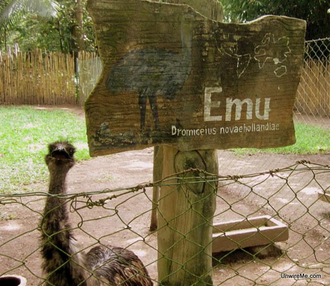 emu at AutoSafari Chapin zoo Guatemala