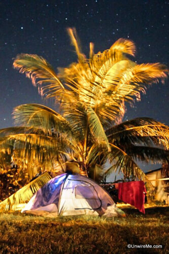 Camping under a palm tree