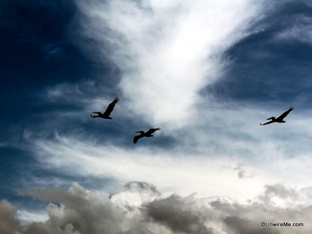 Seagulls in Guatemala