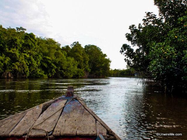 Boad ride through mangroves at Sipacate