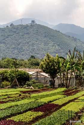 Organic Food Caoba Farms Antigua Guatemala