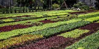 Organic Farm Caoba Farms Antigua Guatemala