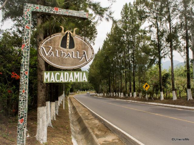 Macadamia Nut Farm Antigua Guatemala