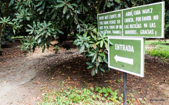 Valhalla Macadamia Farm Antigua guatemala
