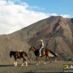 horses pacaya volcano guatemala